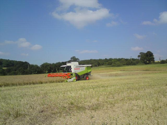 Andrew combining the rapeseed.